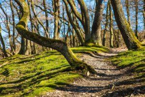 Wanderwege - Schätze im Vogelsberg